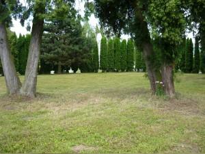 Zeleň na hřbitově