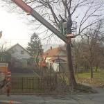kaceni stromu na ul jicinskaa
